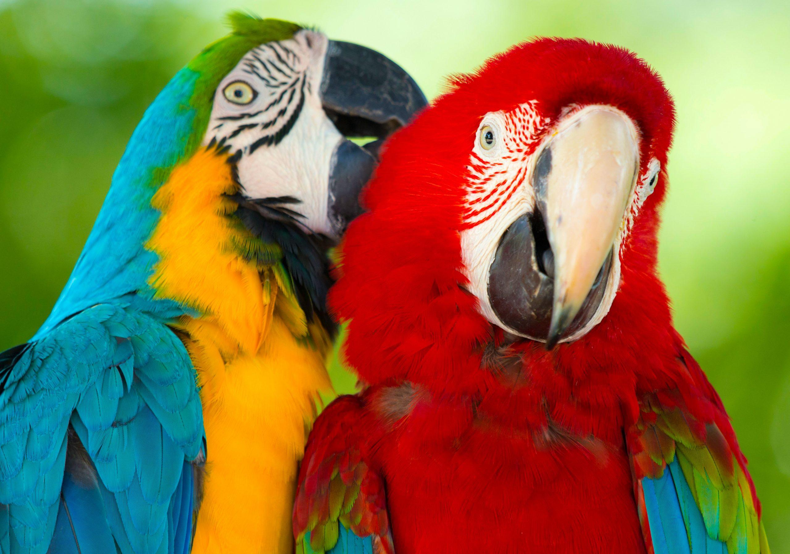 Low Maintenance Pets Parrots