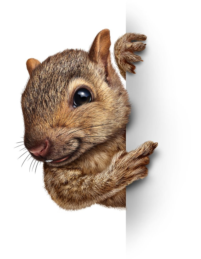 Low Maintenance Pets Squirrel